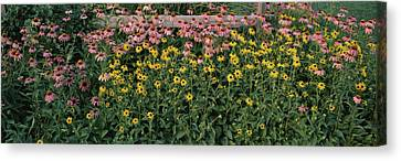 Field Of Flowers In Bloom, Marion Canvas Print by Panoramic Images
