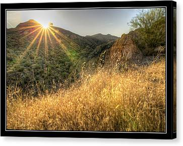 Field Of Gold Canvas Print by Kelly Gibson