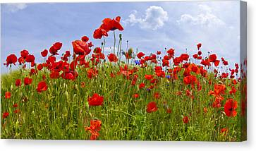 Field Of Red Poppies Canvas Print by Melanie Viola