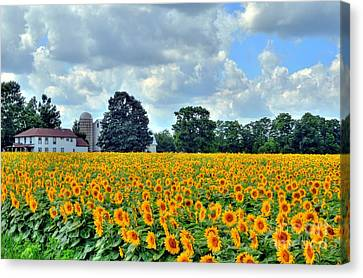Field Of Sunflowers Canvas Print by Kathleen Struckle