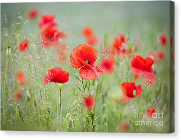 Field Poppies Canvas Print by Jacky Parker