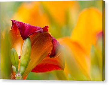 Fiery Flora Canvas Print by Mary Amerman