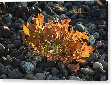 Fiery July Fronds Canvas Print by Tom Trimbath