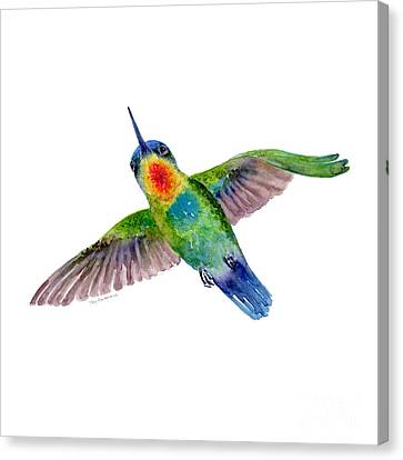 Fiery-throated Hummingbird Canvas Print by Amy Kirkpatrick