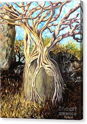 Fig Tree Canvas Print by Caroline Street
