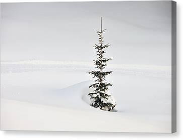Fir Tree And Lots Of Snow In Winter Kleinwalsertal Austria Canvas Print by Matthias Hauser