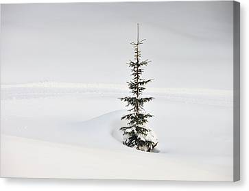 Fir Tree And Lots Of Snow In Winter Kleinwalsertal Austria Canvas Print by Matthias Hauser
