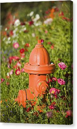 Fire Hydrant & Flowers Kodiak Island Canvas Print by Kevin Smith