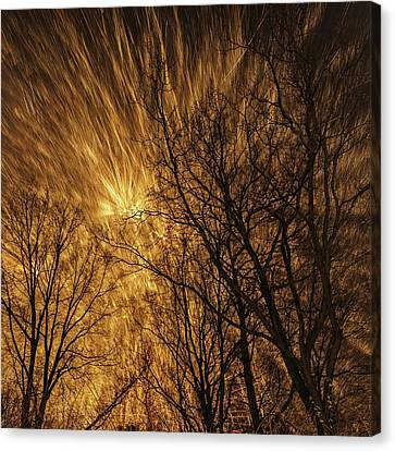 Fireworks And Trees Canvas Print by Babak Tafreshi