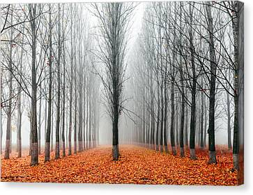 First In The Line Canvas Print by Evgeni Dinev