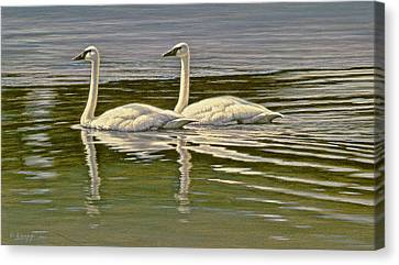 First Open Water - Trumpeters Canvas Print by Paul Krapf