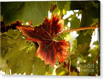 First Signs Of Autumn Canvas Print by Dry Leaf