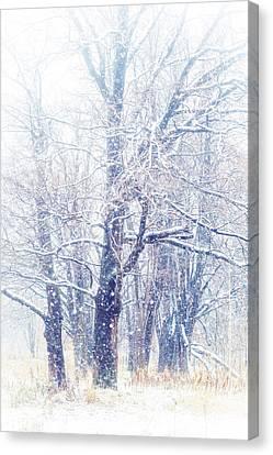 First Snow. Dreamy Wonderland Canvas Print by Jenny Rainbow