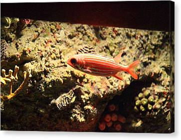 Fish - National Aquarium In Baltimore Md - 1212118 Canvas Print by DC Photographer