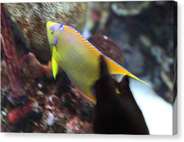 Fish - National Aquarium In Baltimore Md - 121272 Canvas Print by DC Photographer