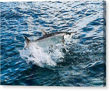 Fish Out Of Water Canvas Print by  Michael Glenn