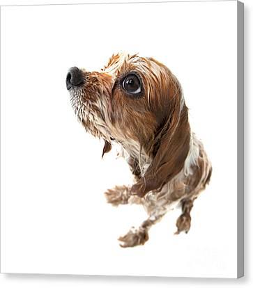 Fisheye Wet Archie Canvas Print by Jane Rix