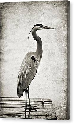 Fishing From The Dock Canvas Print by Scott Pellegrin