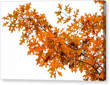 Flames Of The Season - Featured 3 Canvas Print by Alexander Senin