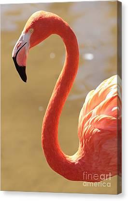 Flaming Flamingo Canvas Print by Carol Groenen