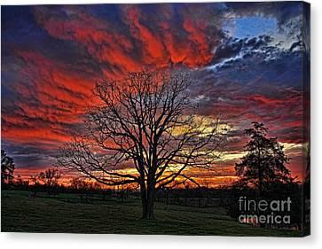 Flaming Oak Sunrise Canvas Print by Reid Callaway