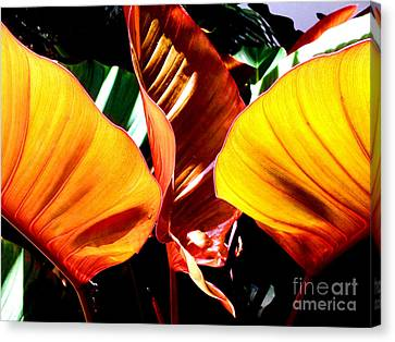 Flaming Plant Canvas Print by Kristine Merc