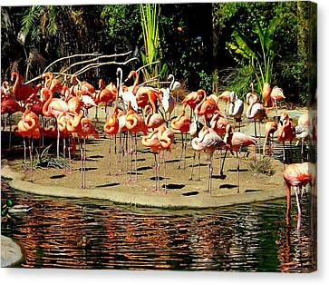 Flamingo Family Reunion Canvas Print by Karen Wiles