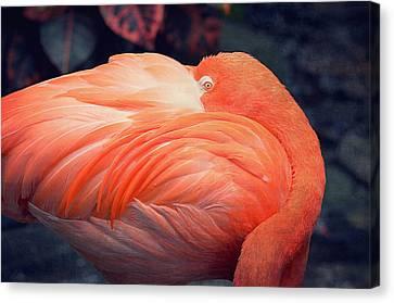 Flamingo Canvas Print by Maria Angelica Maira