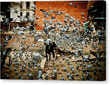 flight of the doves Near Pashupatinath Temple Canvas Print by Raimond Klavins