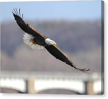 Flight Over The Mississippi Canvas Print by Coby Cooper