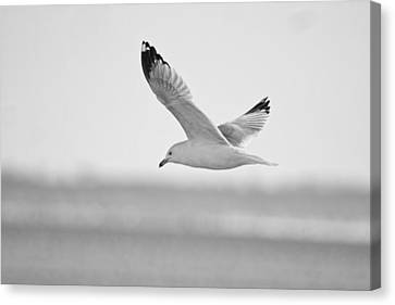 Floating On High 2 Canvas Print by Thomas Young