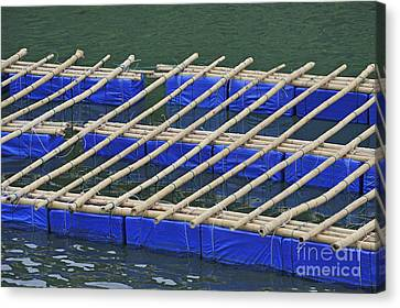 Floatting Nets Canvas Print by Sami Sarkis