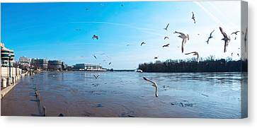 Flock Of Birds Flying At Old Georgetown Canvas Print by Panoramic Images