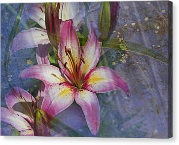 Floral Fantasy V Canvas Print by Barbara Smith