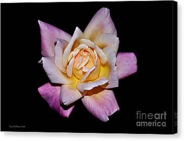 Floribunda Rose In Full Bloom Canvas Print by Susan Wiedmann