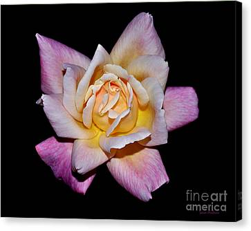 Floribunda Rose Canvas Print by Susan Wiedmann
