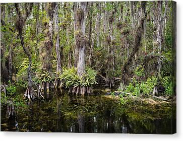 Florida Everglades Tropical Landscape - Big Cypress Swamp Canvas Print by Bill Swindaman