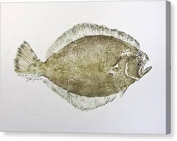 Flounder Canvas Print by Nancy Gorr