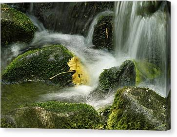 Flow Canvas Print by Kimberly Oegerle