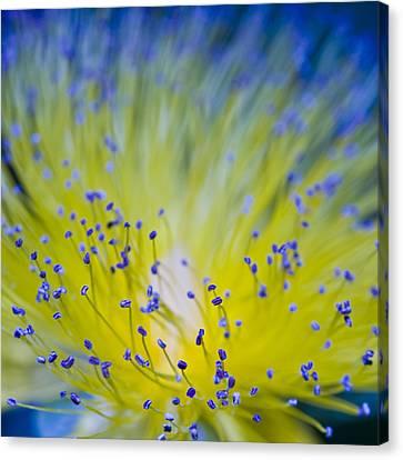 Flower Canvas Print by Juli Scalzi