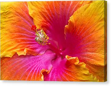 Flower - Hibiscus Rosa-sinesis - Chinese Hibiscus - Appreciation Canvas Print by Mike Savad