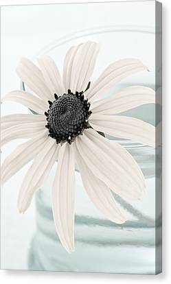 Flower In A Vase Still Life Canvas Print by Frank Tschakert