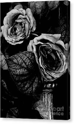 Flower Is Woman Canvas Print by Steven Macanka