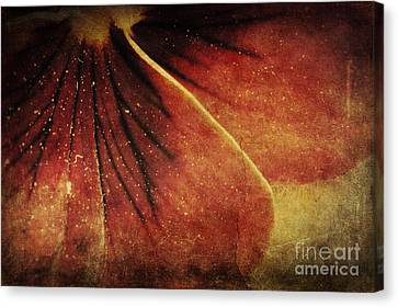 Flower Petals Canvas Print by Mythja  Photography