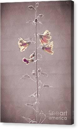 Flower Plant Canvas Print by Svetlana Sewell