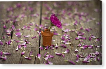 Flower Pot Canvas Print by Aged Pixel