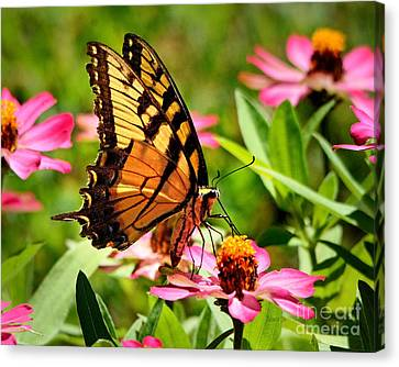 Flower With Wings Canvas Print by Nava Thompson