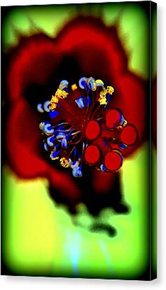 Flower With'in Canvas Print by Kathy Sampson