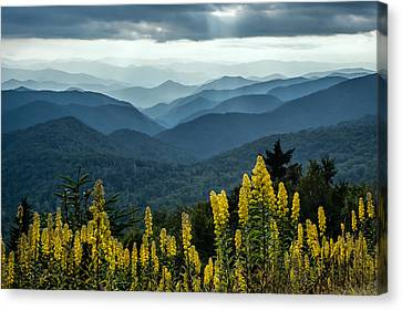 Flowers And Mountains Canvas Print by Rob Travis