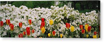 Flowers In A Garden, Sherwood Gardens Canvas Print by Panoramic Images